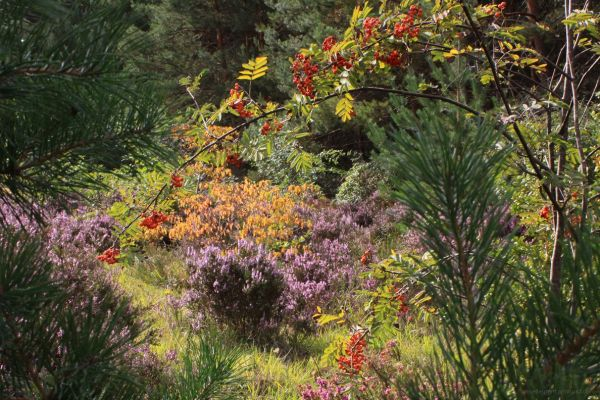 biodiversité en couleurs