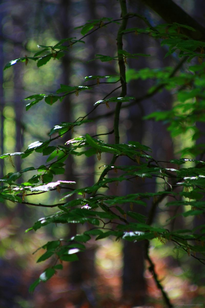 vitrail forestier