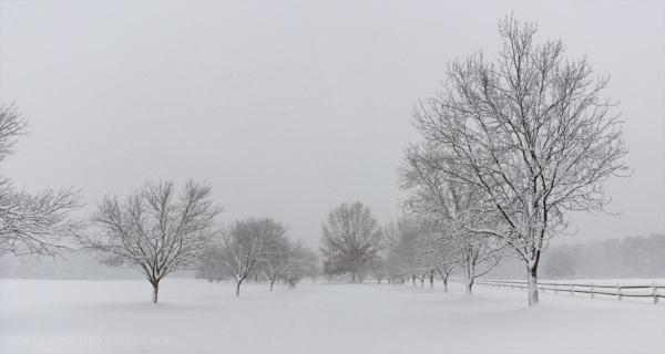 winter snow scene, garner, north carolina