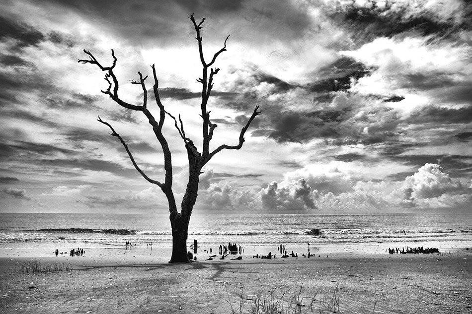 botany bay low tide, edisto island, south carolina
