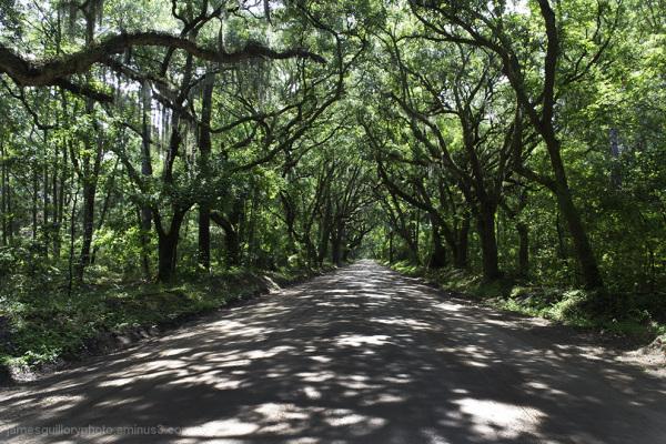 botany by road, to botany bay, south carolina