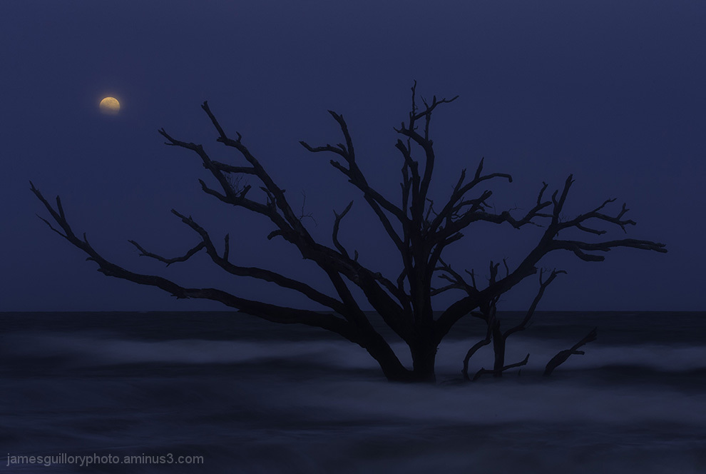 botany bay full moon, edisto, south carolina.