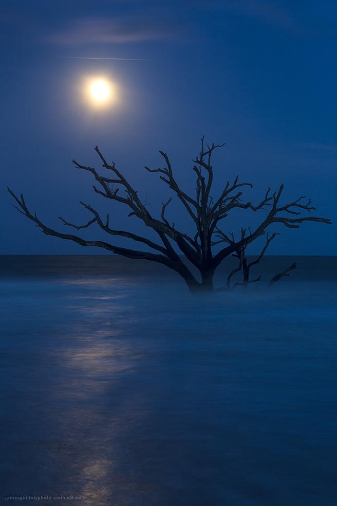 botany bay full moon, edisto, south carolina.