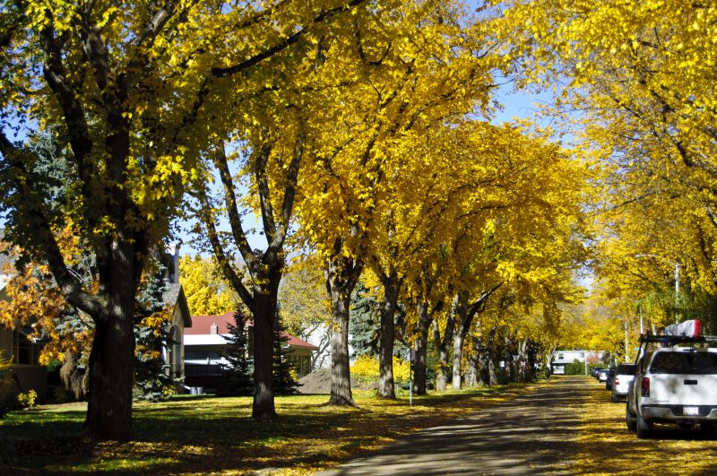 Windsor Park Neighborhood, Edmonton AB