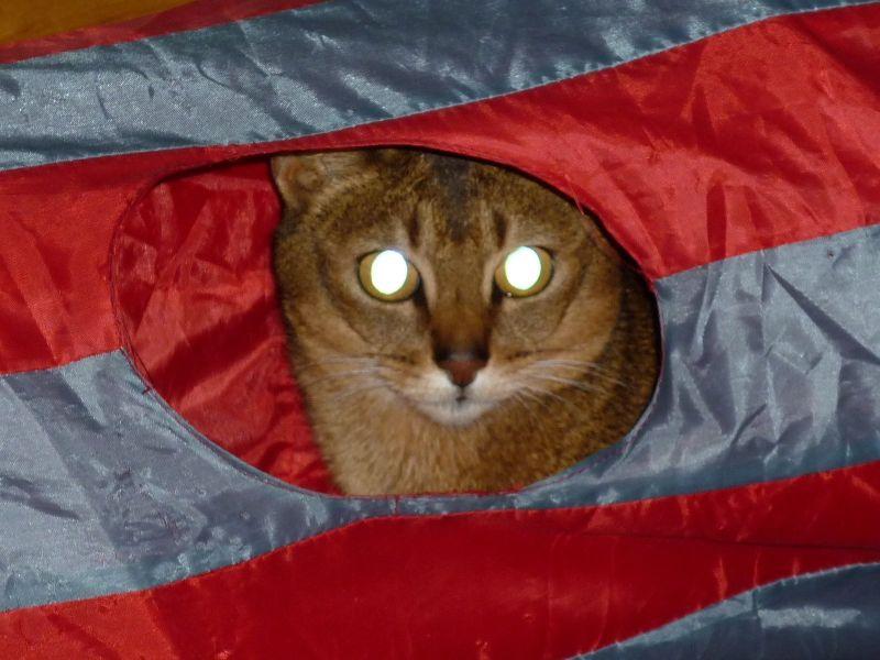 evil eyed cat