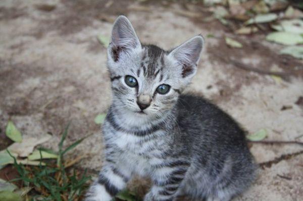 wild farm kitten