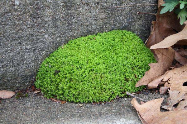 moss on steps