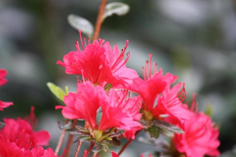 red spring blooms