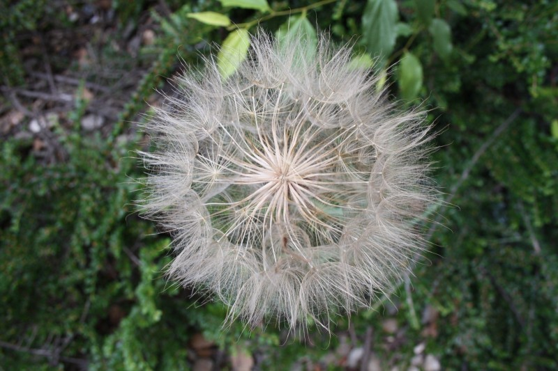 plant in seed