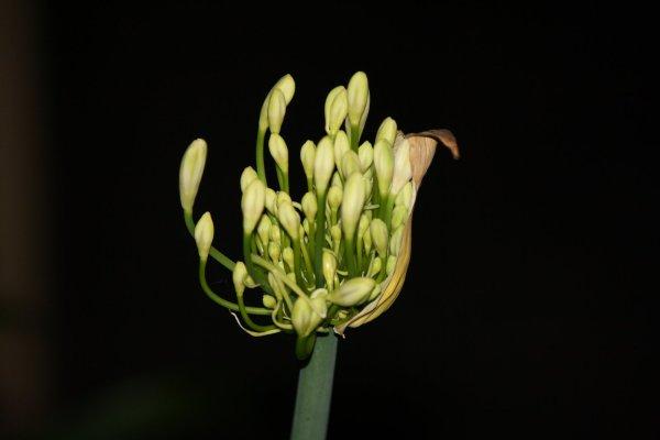 buds at night