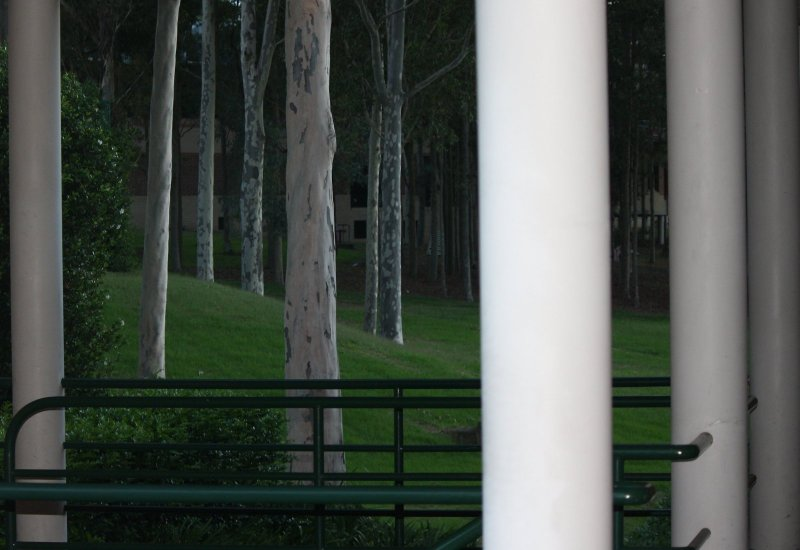 columns and trees