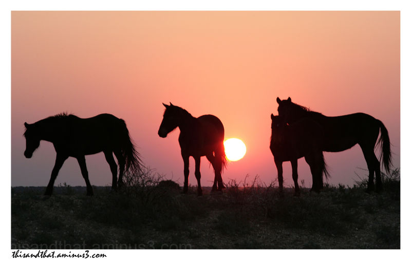 Horses standing on the ridge as the sun set.
