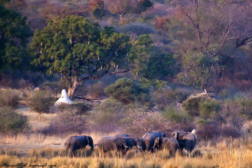 Elephants grazing on the shores of the river.