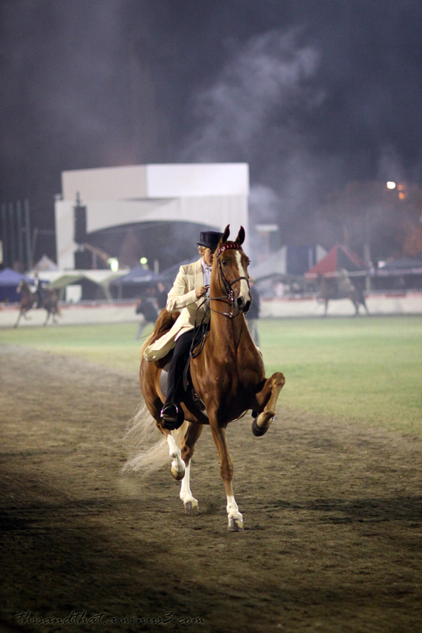 Rider exhibiting horse at a show.