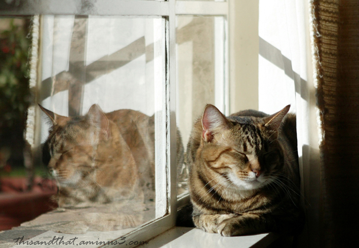 A cat nap in the sun.