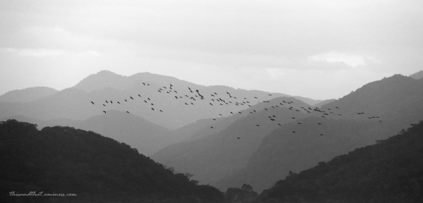 Birds flying home to roost.