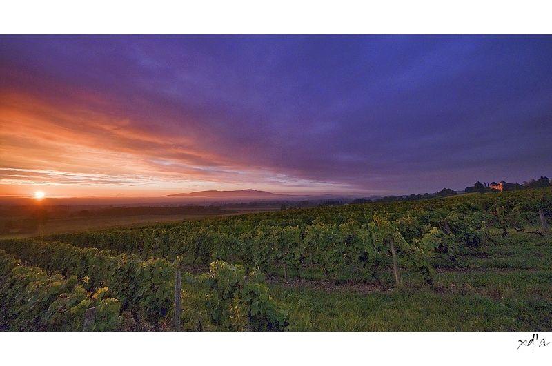 Le soleil se lève sur les vignes du Beaujolais