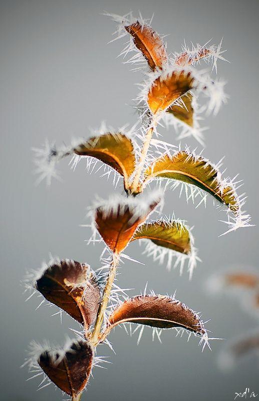 Les griffes de l'hiver