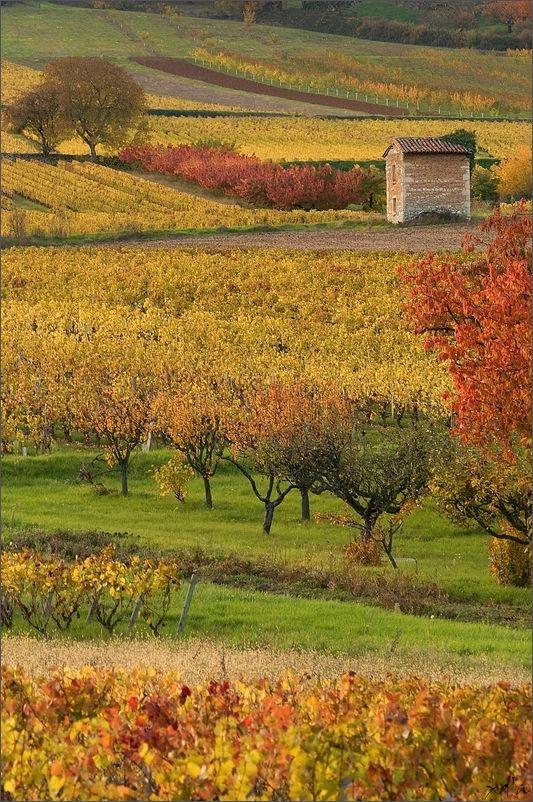 Le Beaujolais en automne