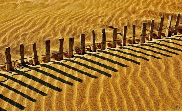 De l'or sur la dune
