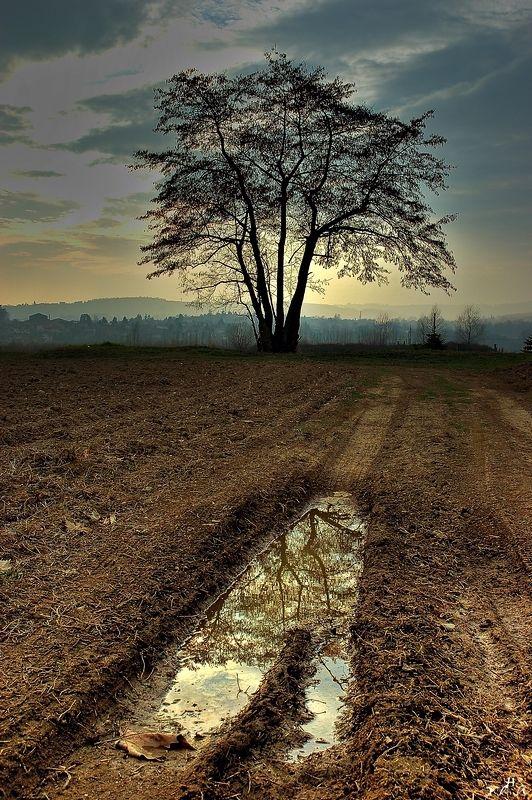 Debout sur les champs tristes