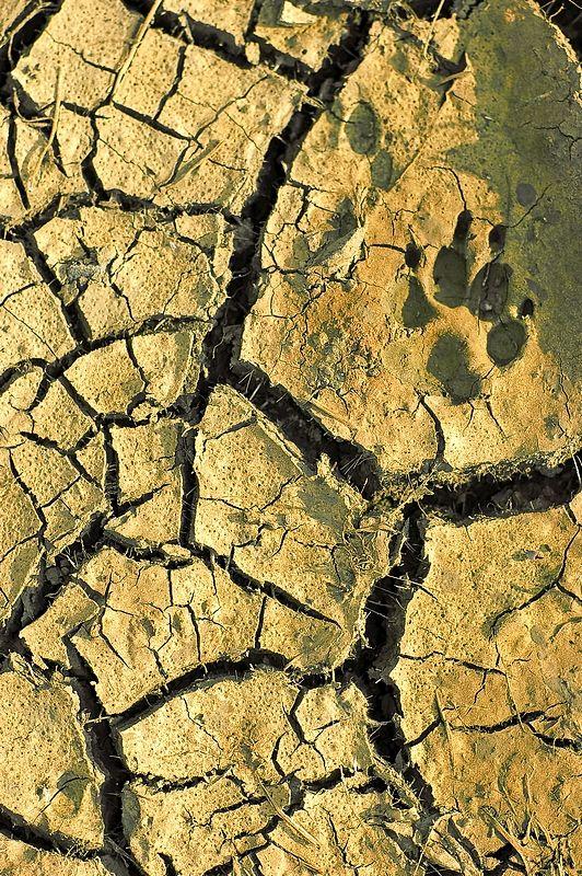 La sècheresse