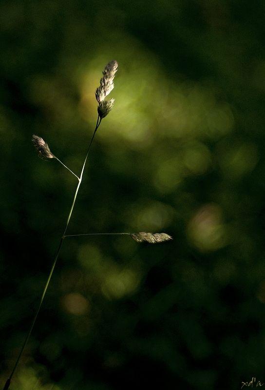 Un brin de nature
