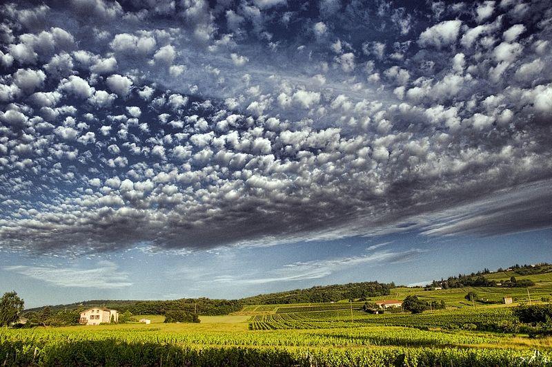 Sous un ciel moutonneux