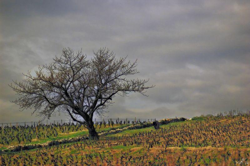 Seul au milieu des vignes