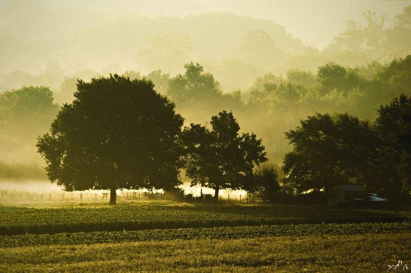 Un matin brumeux