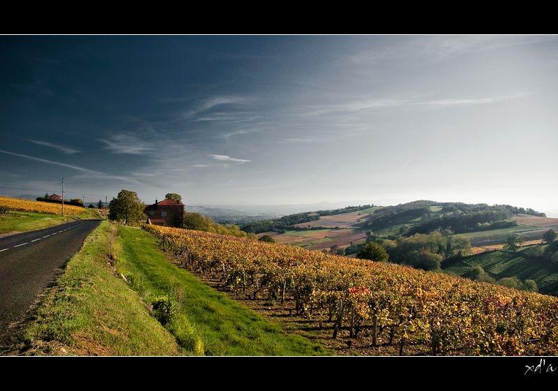 Paysage du Beaujolais