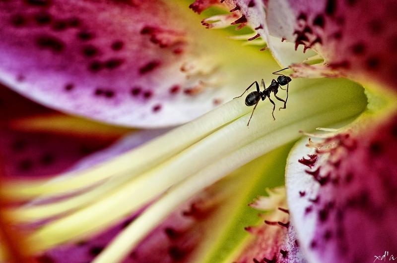 Un travail de fourmi