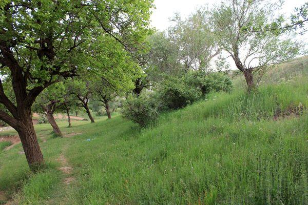 garden tree
