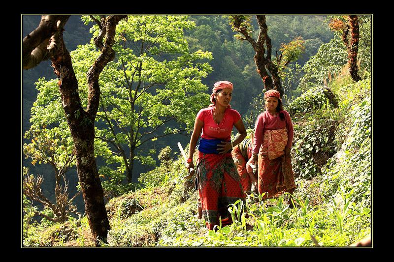 femmes aux champs