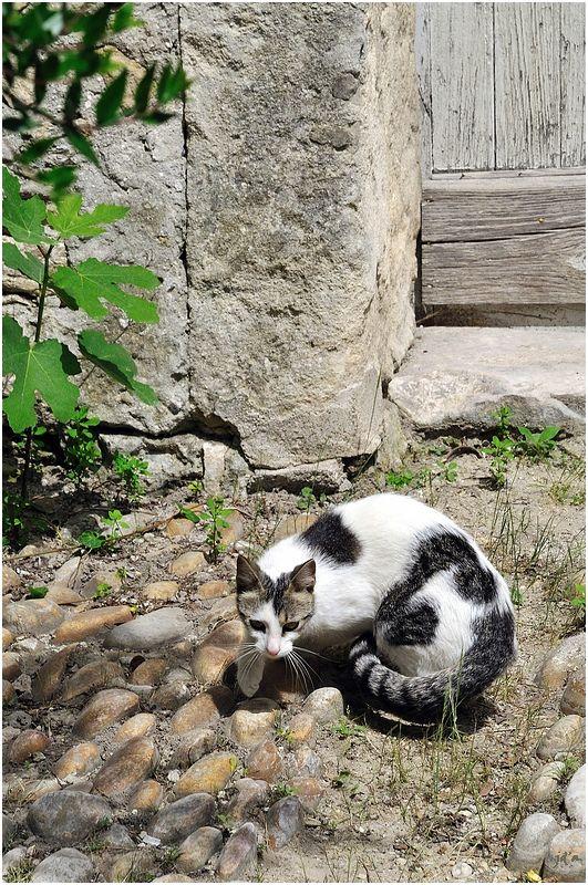 Un chat à l'affût