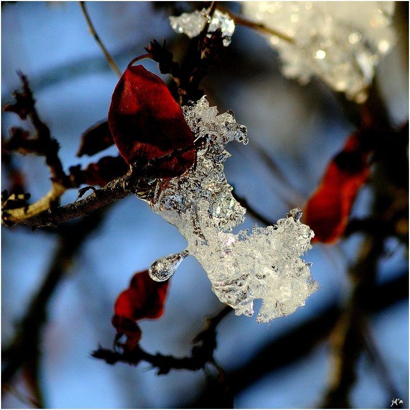 de la glace entre les branches