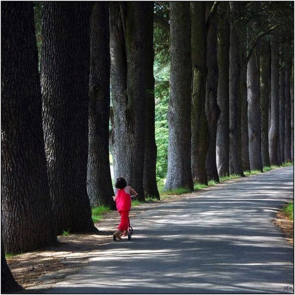 Une petite fille en trottinette sous les arbres
