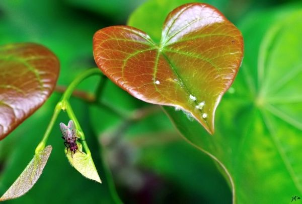 Une mouche se promene sur une feuille