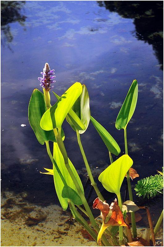 Fleurs sauvages au bord de l'eau