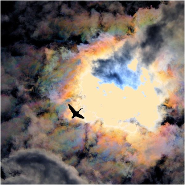 Un oiseau passait la haut dans le ciel