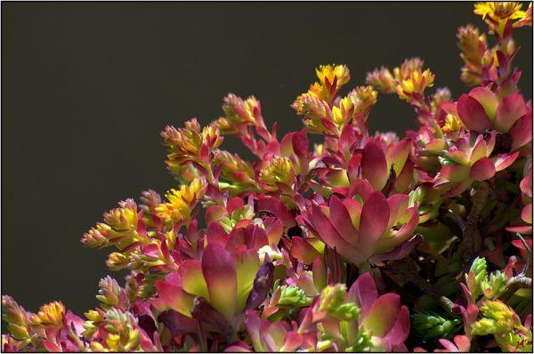 Des fleurs sauvages sur un muret