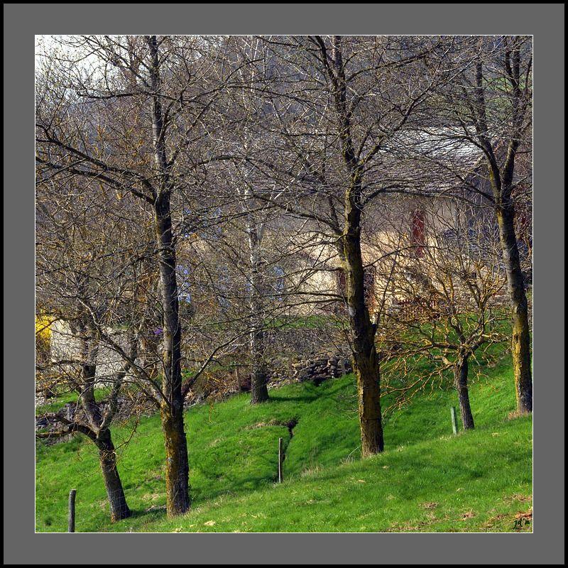 Une maison apparaît à travers les arbres.