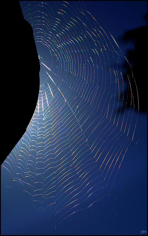 Une toile d'araignée brille au soleil