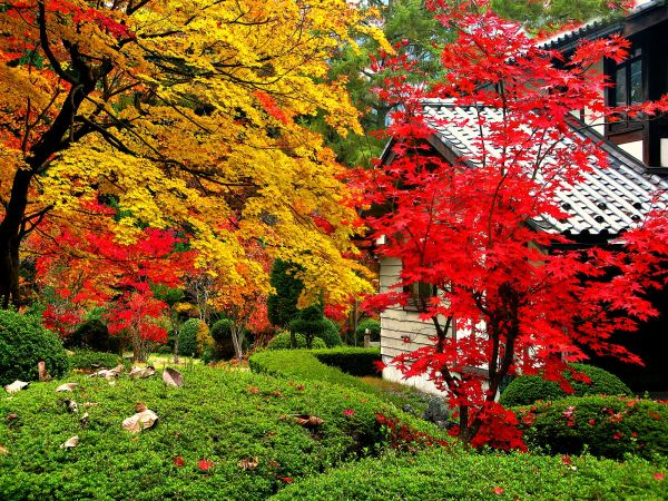 Japanese colours of autumn