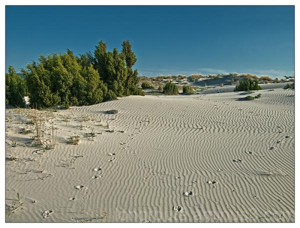 Sand dunes of Porto Pino, Sardinia