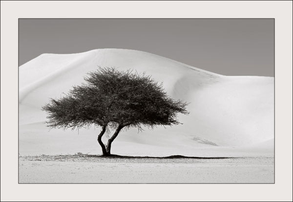 A lonely tree in the desert, Algeria