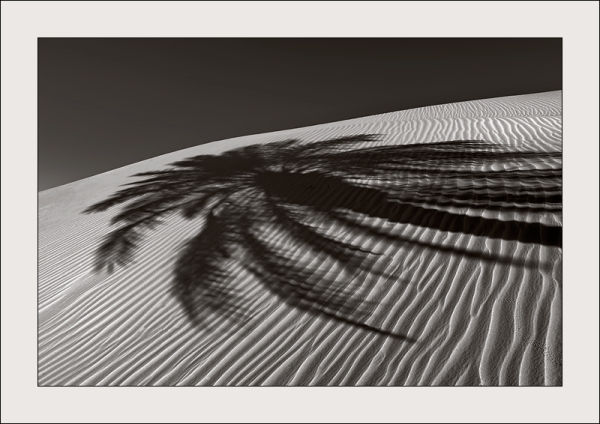 Shadow of a palm-tree on a dune, Algeria