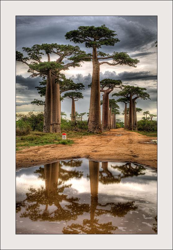Allée des baobabs à Morondana, Magagascar
