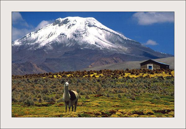 Sajama volcano, Bolivia