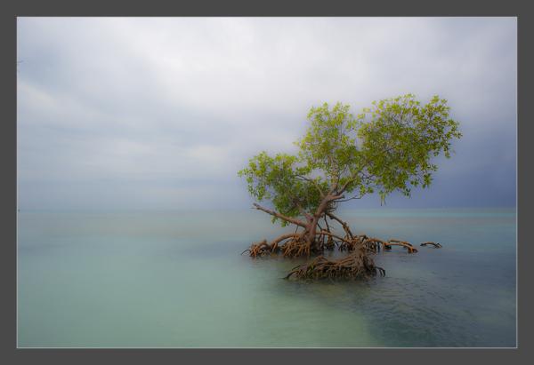 Mandrove swamp in Cuba